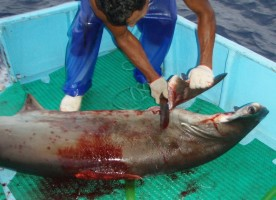 Shark finning affects marine life ecosystems all over the world